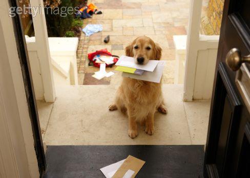 sb10069719ao 001 Animais de estimação X Condomínios