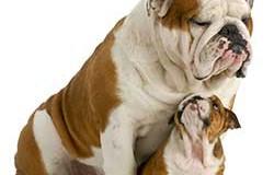 Idade de cachorros e gatos – Tabela de conversão