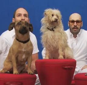 OK Go – White Knuckles para a ASPCA