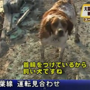 japan 290x290 Exemplo de lealdade