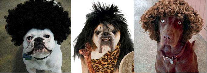 Cachorro de peruca