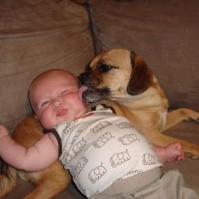 ATT000033 290x290 Crianças e animais de estimação em fotos