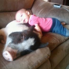 ATT000099 290x290 Crianças e animais de estimação em fotos