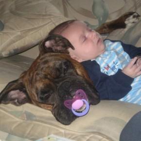 ATT0001212 290x290 Crianças e animais de estimação em fotos