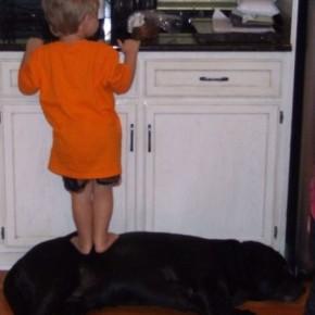 ATT0001414 290x290 Crianças e animais de estimação em fotos