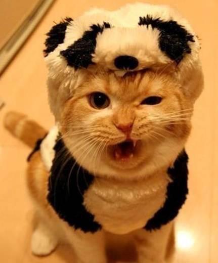 Especial fotos #CatLoversDay
