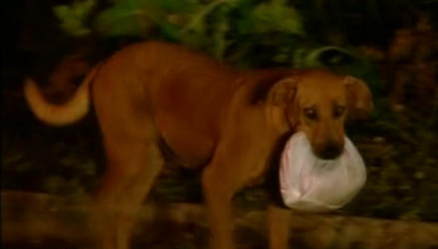 Lilica anda 2 km diários para alimentar outros animais