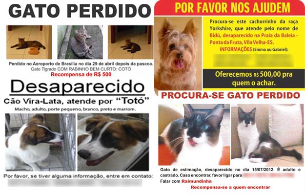 Centro de Controle de Zoonoses realiza mutirão em São Paulo