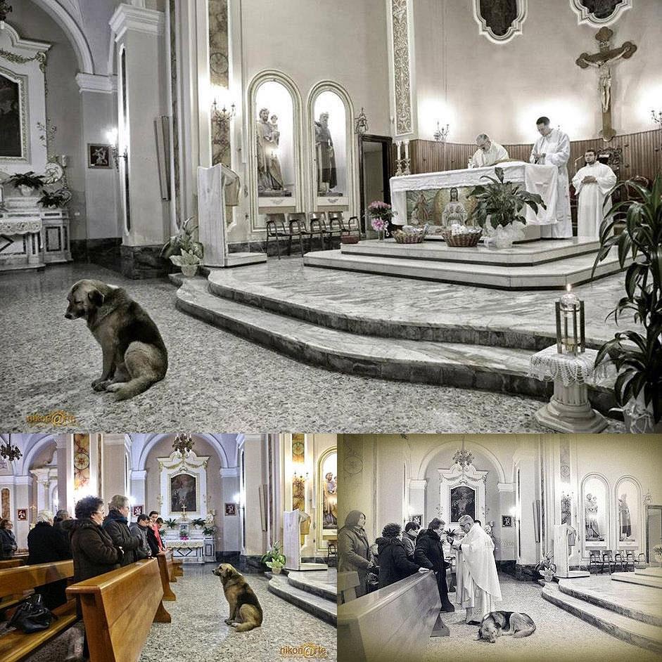 Cão resgatado continua indo à missa depois da morte da dona