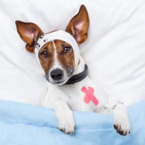 ambulancias caninas 290x290 SamuVet: Excelente iniciativa em Florianópolis