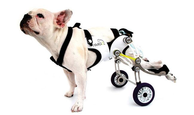 USP procura cães com hérnia de disco
