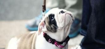 Pesquisa confirma que cão vê os donos como pais