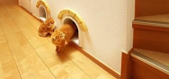 Design para sua casa e seu gato