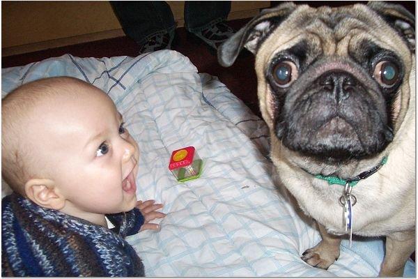 Bebê chegando? Prepare seu cachorro ciumento