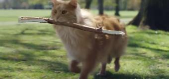 Gato tem comportamento canino em comercial