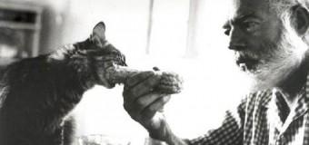 Gatos com polidactilia: a grande paixão de Hemingway