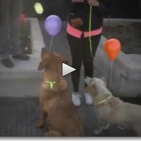 LiveLeak.com I am here 290x290 Chile: Intervenção urbana para de cães de rua