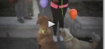 Chile: Intervenção urbana para de cães de rua