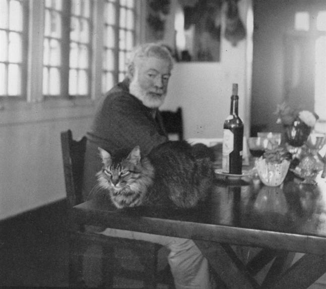 hemingway gato 1 Gatos com polidactilia: a grande paixão de Hemingway