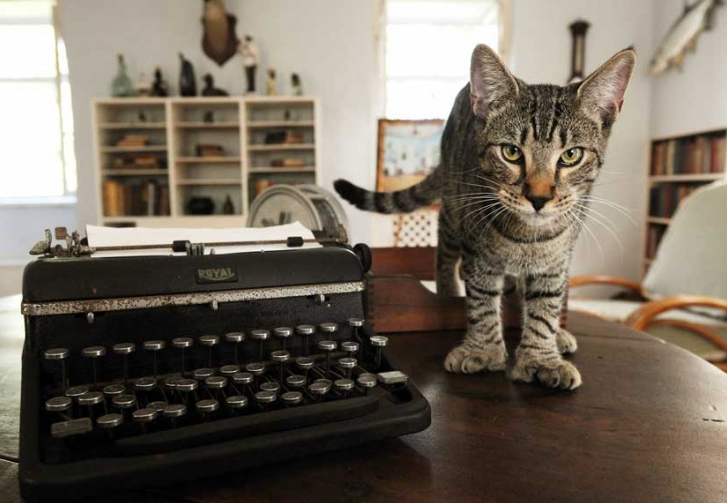 hemingway gato Gatos com polidactilia: a grande paixão de Hemingway