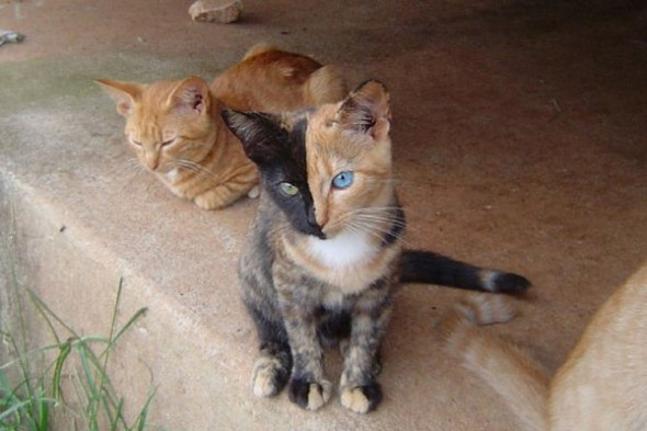 Gato marca Love Pet 590x393 Top 10 Gatos com marcas inusitadas
