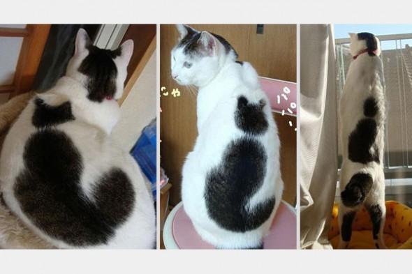 Gato marca Love Pet 10 590x393 Top 10 Gatos com marcas inusitadas