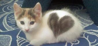 Top 10 Gatos com marcas inusitadas