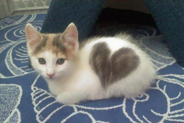 Gato marca Love Pet 3 590x393 Top 10 Gatos com marcas inusitadas