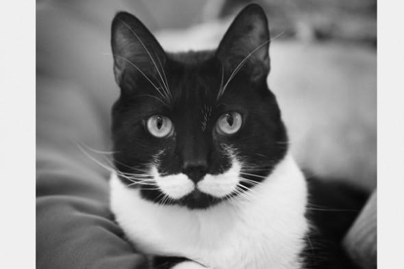 Gato marca Love Pet 5 590x393 Top 10 Gatos com marcas inusitadas