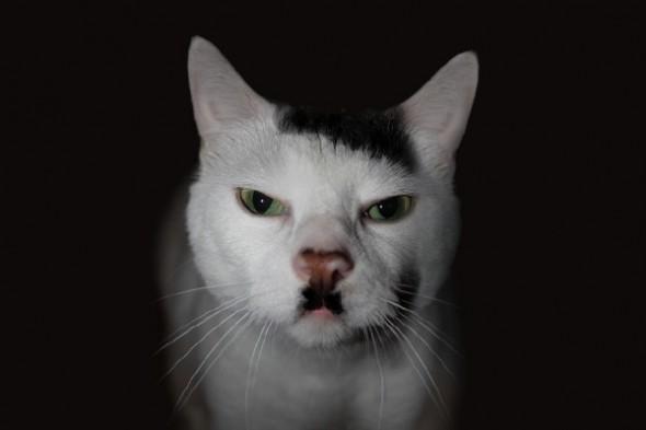 Gato marca Love Pet 6 590x393 Top 10 Gatos com marcas inusitadas
