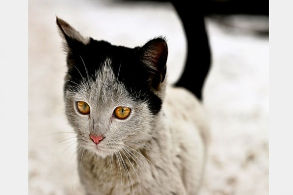 Gato marca Love Pet 7 590x393 Top 10 Gatos com marcas inusitadas