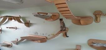 Gatos ganham móveis projetados de luxo