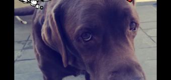 BarkCam: App ajuda seu cão a sair bem na foto