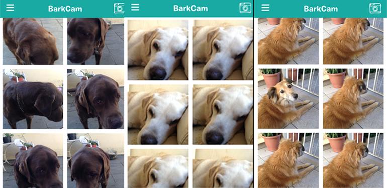 Sem Título 2 BarkCam: App ajuda seu cão a sair bem na foto