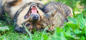 Cuidado! Plantas tóxicas para os seus pets