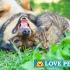 Plantas tóxicas para seu pet
