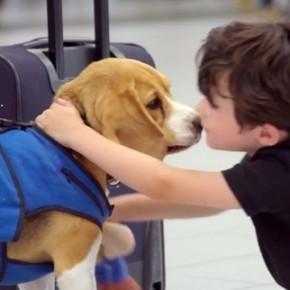 klm beagle dog lost found video 600x337 290x290 Beagle da KLM devolve itens perdidos em voos