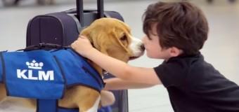 Beagle da KLM devolve itens perdidos em voos