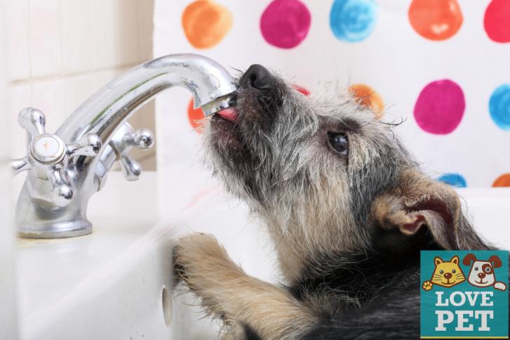 calor 1 727x484 Calor: Dicas para assegurar a saúde do seu pet