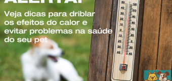Calor: Dicas para assegurar a saúde do seu pet
