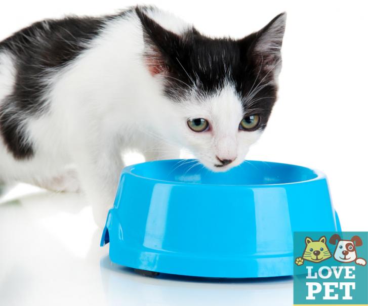 calor gatinho 727x605 Calor: Dicas para assegurar a saúde do seu pet