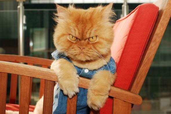 garfi 12 590x394 Garfi: Fotos do gato persa mais mal humorado do mundo