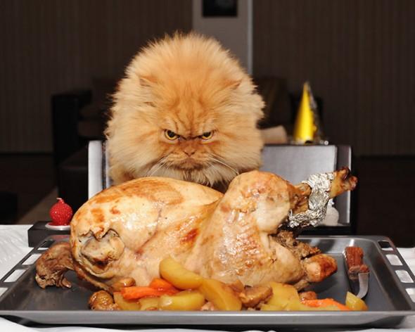 garfi 14 590x472 Garfi: Fotos do gato persa mais mal humorado do mundo