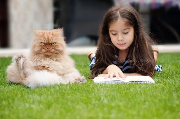 garfi 2 590x391 Garfi: Fotos do gato persa mais mal humorado do mundo