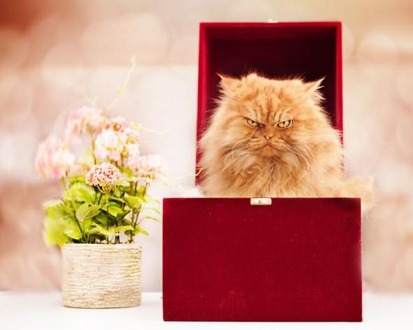 garfi 25 590x472 Garfi: Fotos do gato persa mais mal humorado do mundo