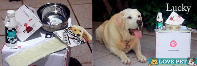LuckyDL1 DogLikers mandou presentes para nossa equipe! Veja