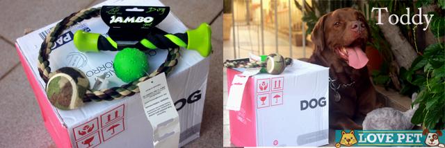 ToddyDL1 DogLikers mandou presentes para nossa equipe! Veja